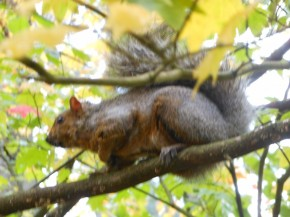Squirrel, Central Park, Burnaby BC