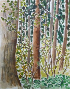 Water colour sketch of Burnaby forest.