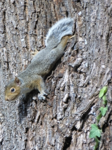 This is the baby squirrels'  first day out in the sun, he is eating ants.