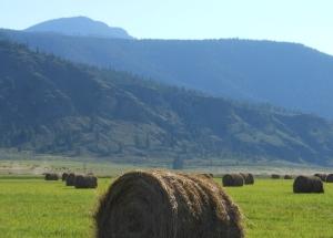 Hay bales on a farm near Westwold BC.