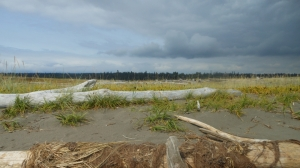 Driftwood and sand grasses on Iona Beach with the trees of Pacific Spirit Park on the horizon.