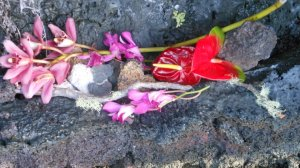Flowers as found in volcano crater.