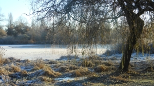 Frosty morning at Trout Lake, John Hendry Park, Vancouver, Canada