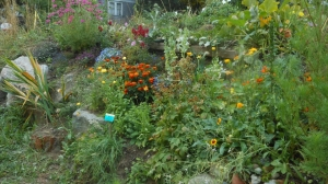 This is the flower garden I planted and watered at Cedar Cottage Community Garden. The bees really enjoyed it.